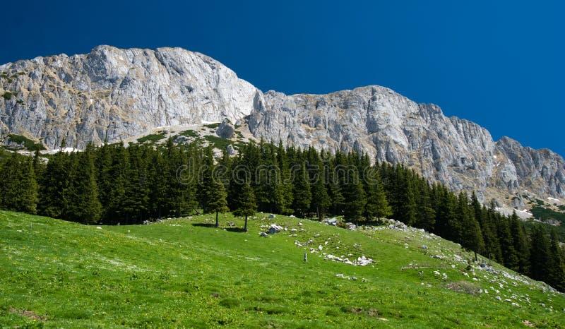 喀尔巴阡山脉的山罗马尼亚 免版税库存照片