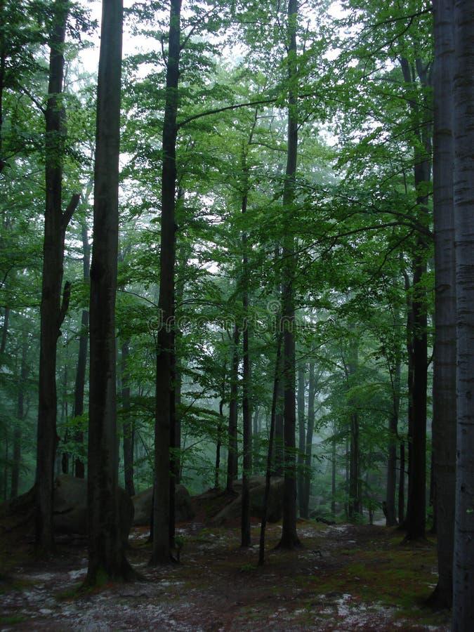 喀尔巴阡山脉的森林 免版税库存照片