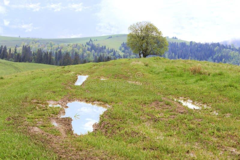喀尔巴阡山脉的美好的春天风景在温暖的雨以后的 库存照片