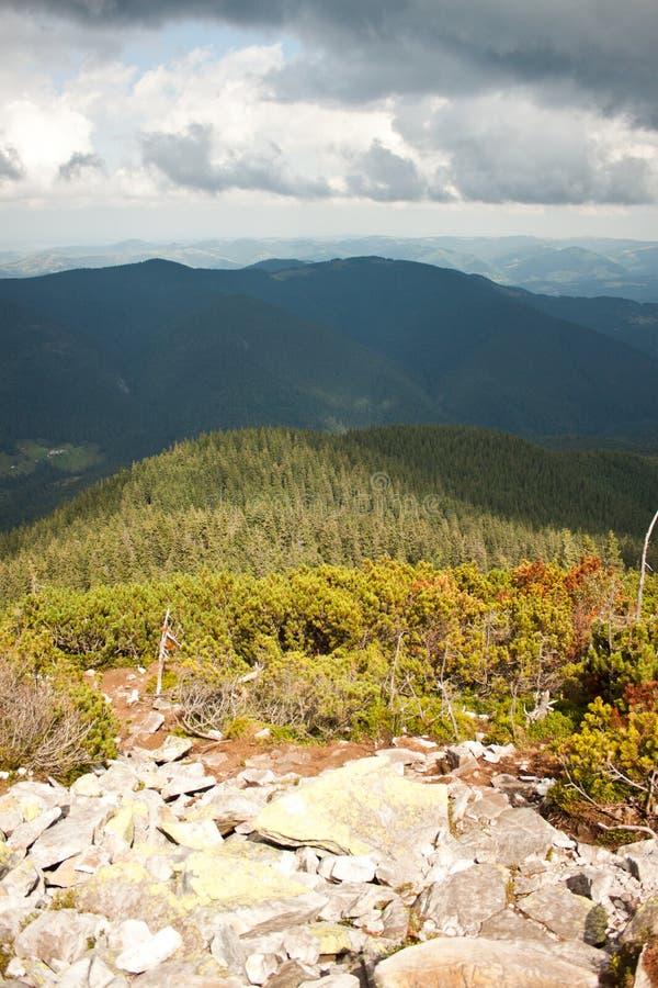 喀尔巴阡山脉和森林 免版税库存照片