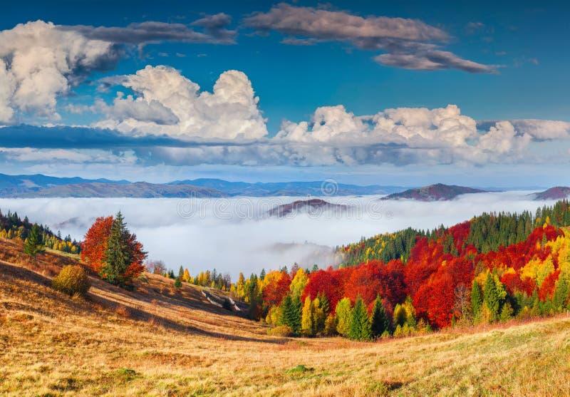 喀尔巴阡山脉的五颜六色的秋天全景 Sokilsky r 免版税库存照片
