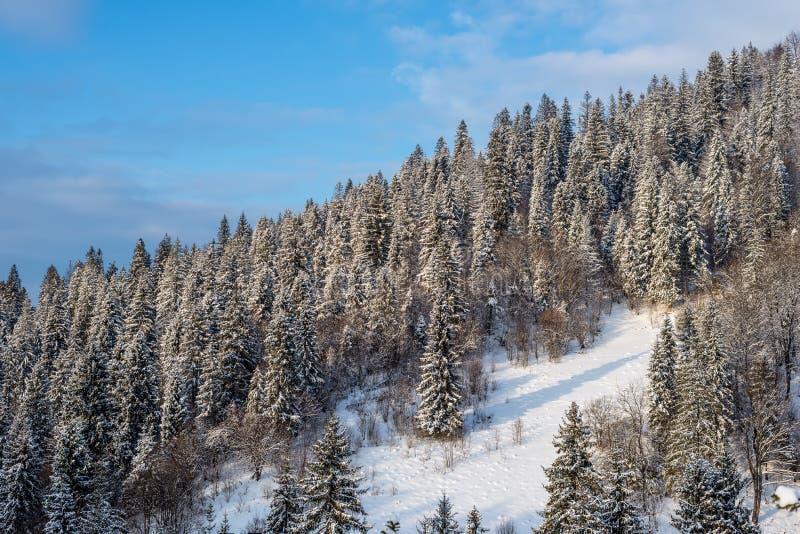 喀尔巴阡山脉的冬天风景,乌克兰 库存照片