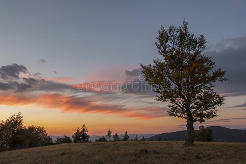 喀尔巴阡山脉的风景 免版税库存图片