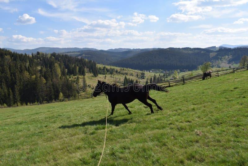 喀尔巴阡山脉的马 免版税库存照片