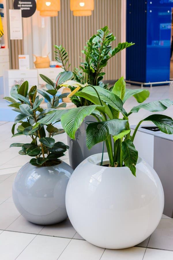 喀山/俄罗斯- 2019年5月10日:植物的有趣和异常的罐有圆形的 免版税图库摄影