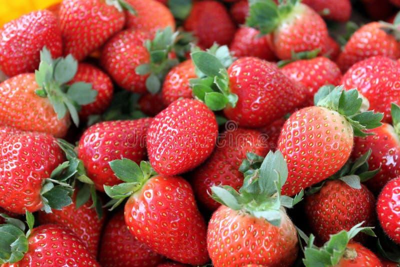 喀麦隆高地草莓 库存图片
