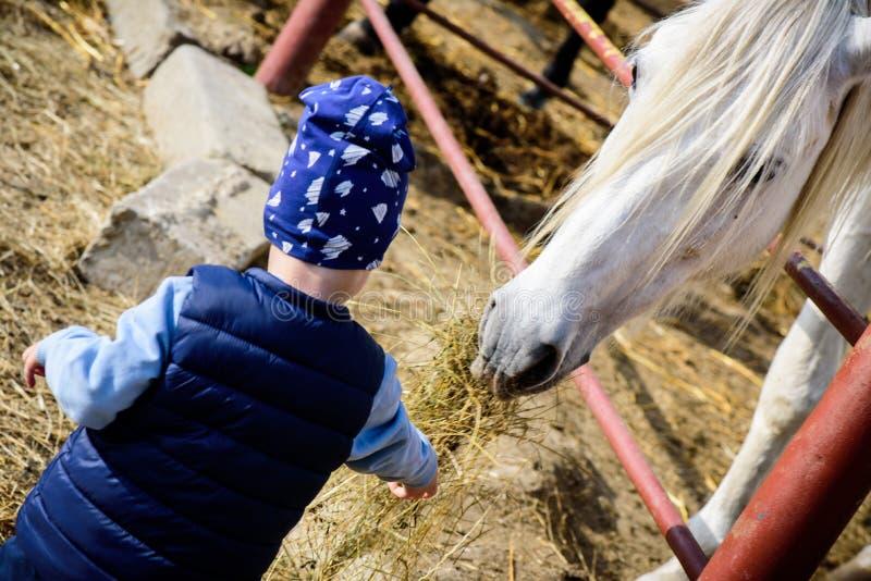 马大农场 男孩哺养的马 图库摄影