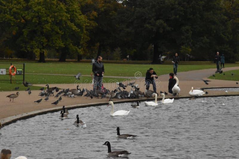 喂养鸟在海德公园,伦敦,英国, 10月4日的人们 免版税库存照片