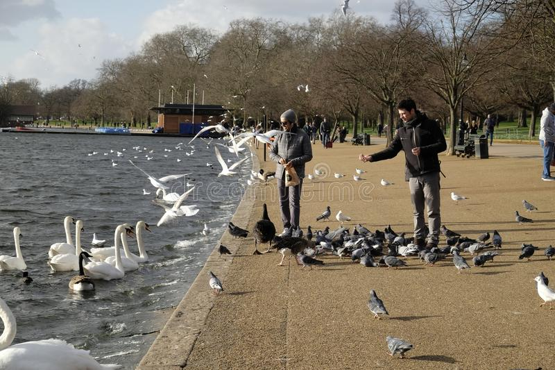 喂养鸟在海德公园,伦敦,英国 库存照片