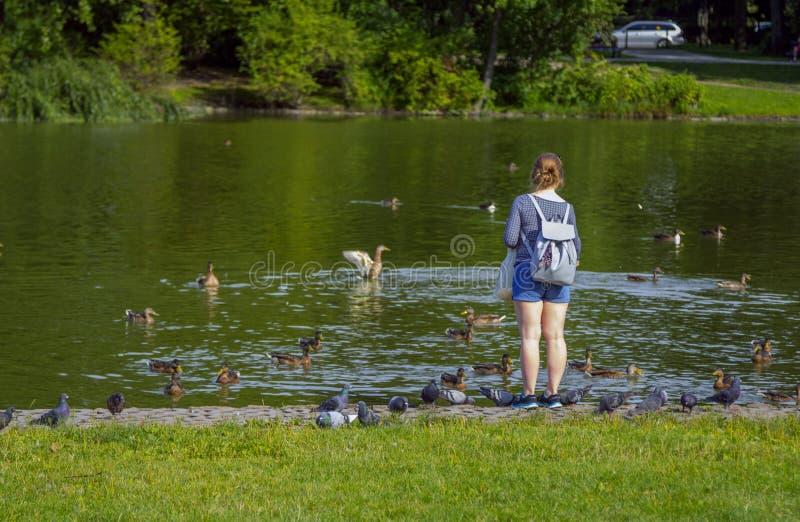 """喂养鸟的少妇†""""在公园低头和鸽子 库存照片"""