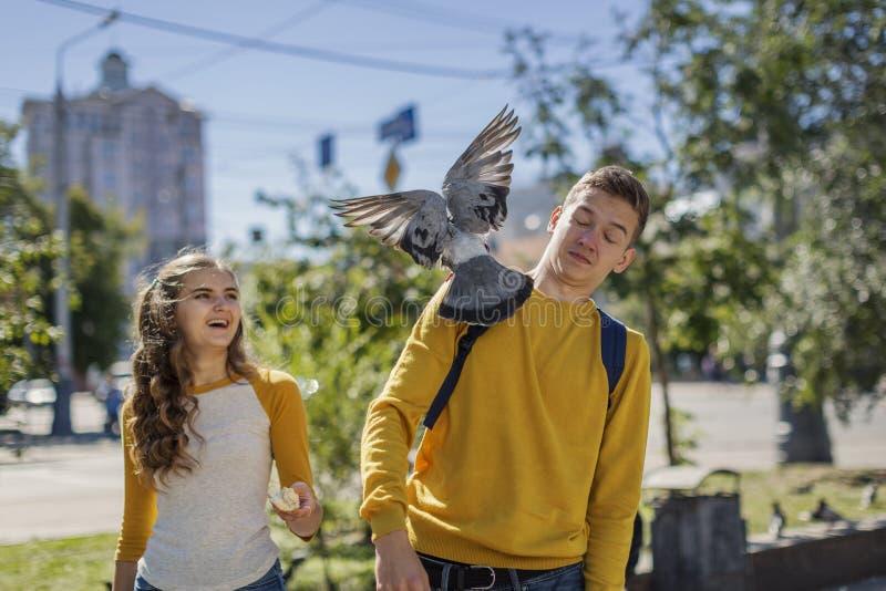 喂养在城市街道上的夫妇少年鸽子 免版税图库摄影