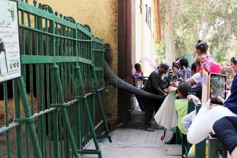 喂养大象的孩子 免版税图库摄影