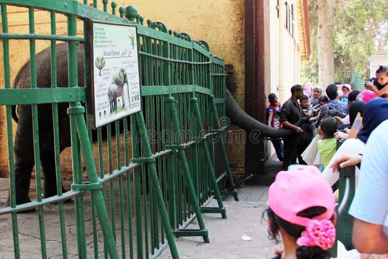 喂养大象的孩子 免版税库存照片