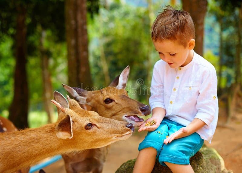 喂养从手的逗人喜爱的男孩幼小鹿 在鹿的焦点 库存图片
