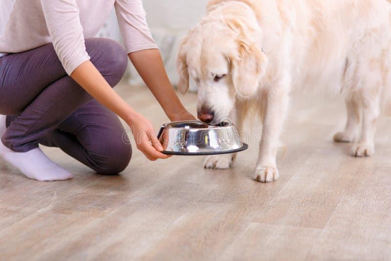 喂养狗的有同情心的妇女 库存图片