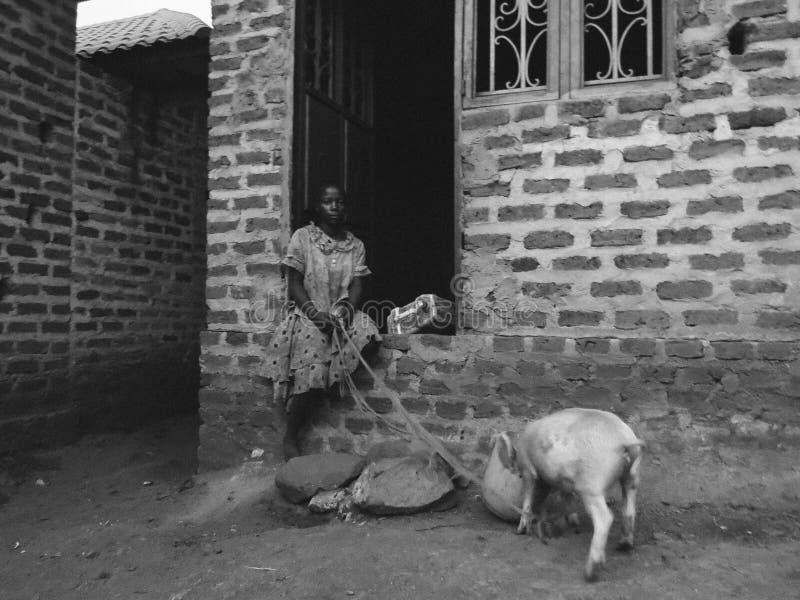 喂养猪的女孩在乌干达 库存图片