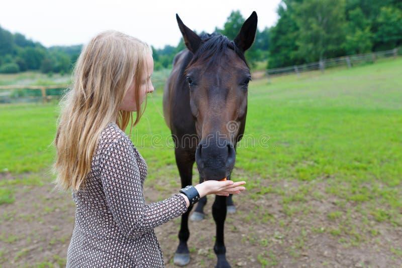 喂养马的女孩 免版税库存图片