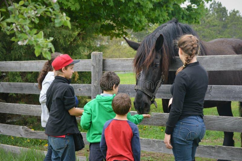 喂养马的孩子 库存照片