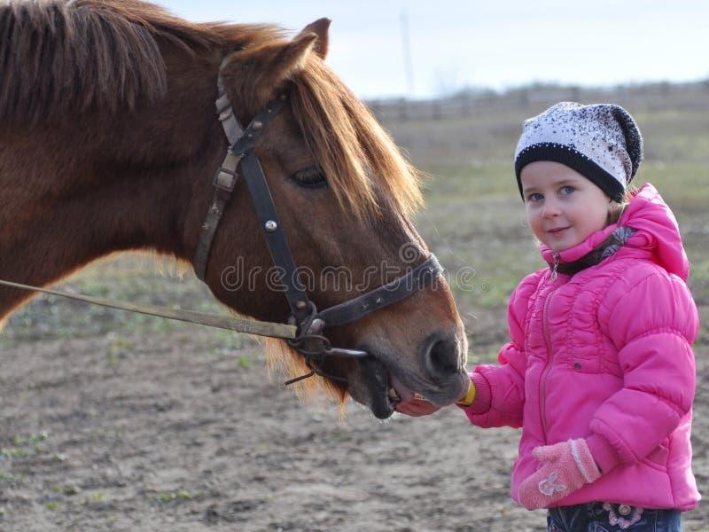 喂养马的小女孩 免版税库存照片