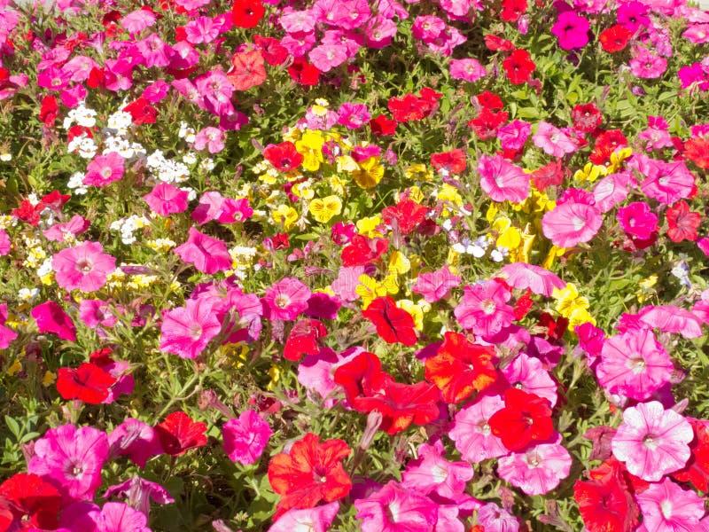 喇叭花花自然庭院背景样式 免版税图库摄影