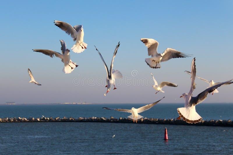 喙黑色停止的鸭子战斗食物他的一海鸥他们 免版税库存图片