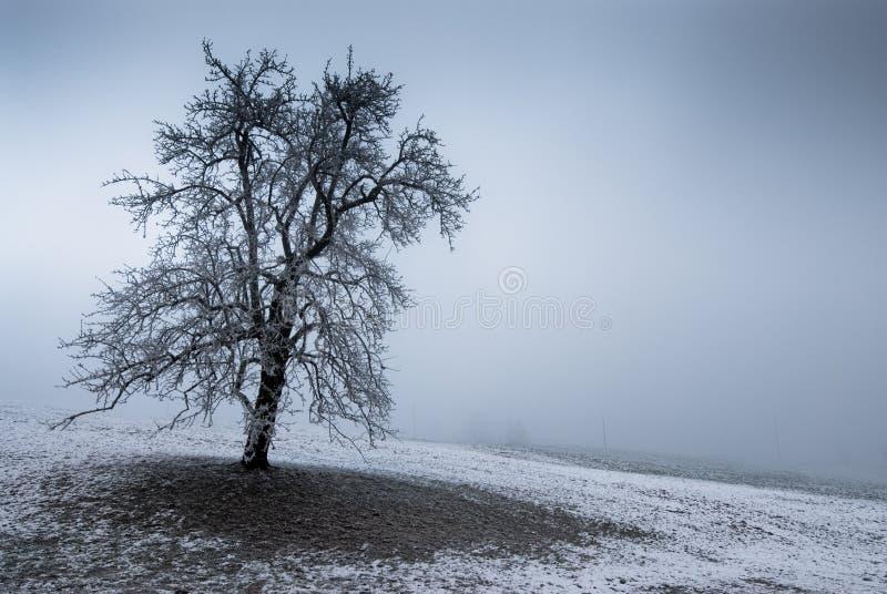 喜怒无常的结构树 库存图片