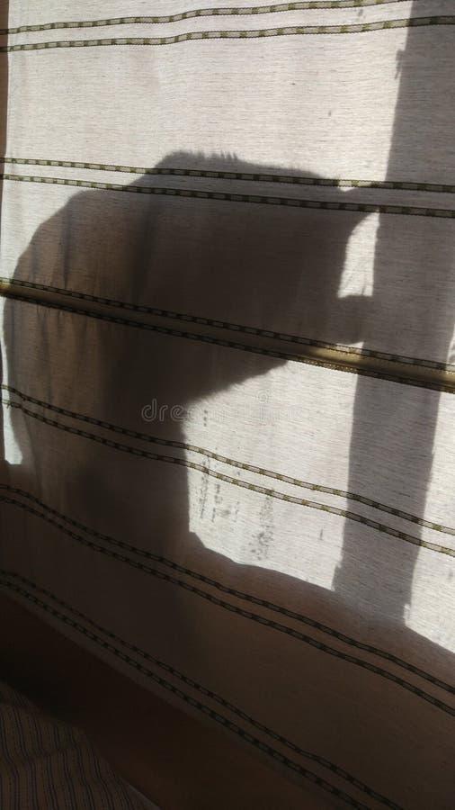 喜欢,阴影艺术家的猫 免版税图库摄影