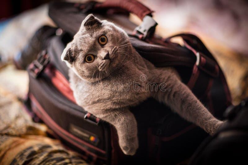 喜爱的猫摄影师 免版税库存照片