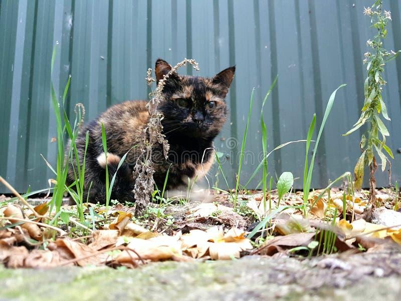 喜爱的猫 免版税库存图片