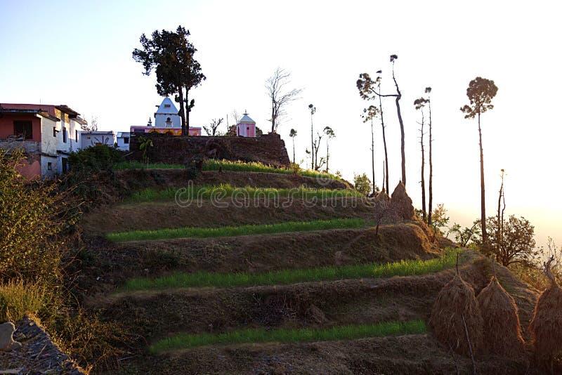 喜马拉雅印度村庄露台的农场 库存图片