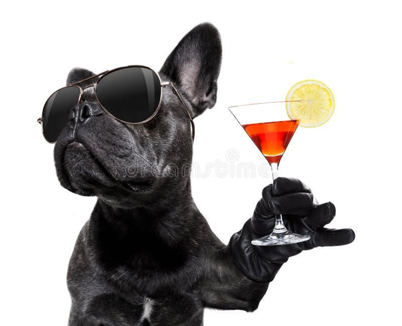 喝鸡尾酒的醉酒的狗 库存照片
