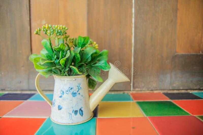 喷壶花瓶的美丽的植物 库存图片