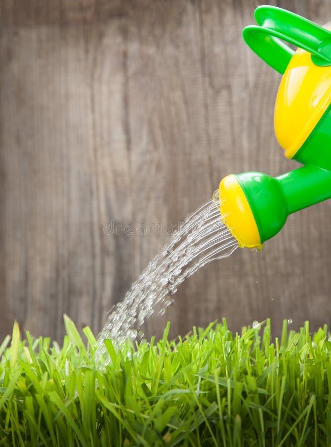 喷壶给草喝水在木篱芭在一个夏日 免版税图库摄影