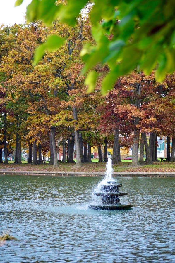 喷泉叶子 库存照片