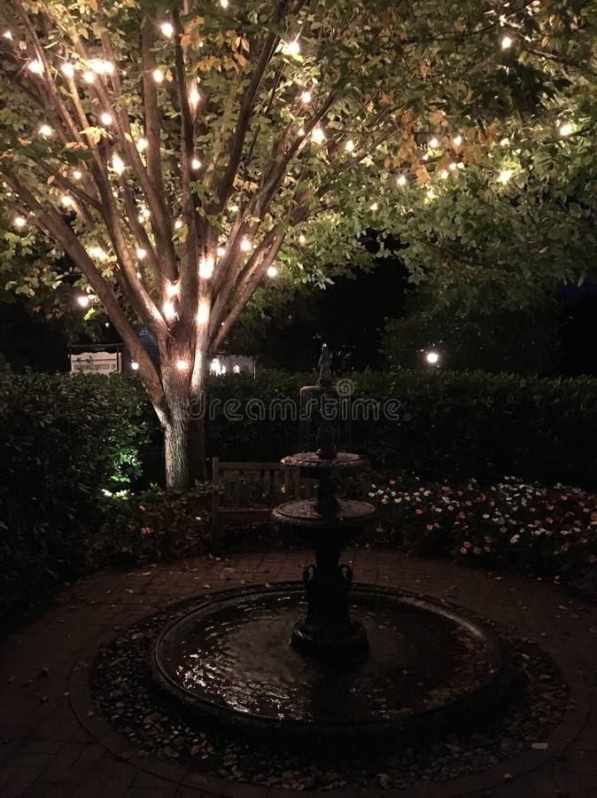 喷泉和被点燃的树 免版税库存照片