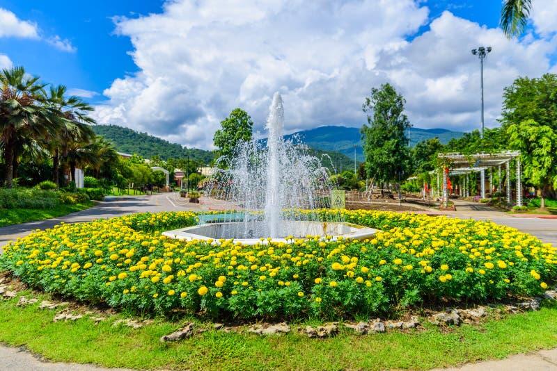 喷泉在万寿菊花园里 图库摄影