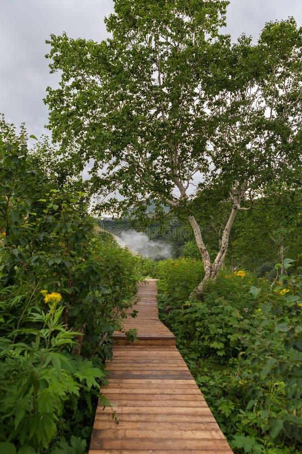 喷泉木足迹和桦树谷  免版税库存照片