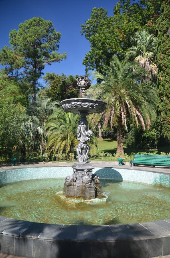喷泉的看法在公园树木园市索契 免版税库存图片