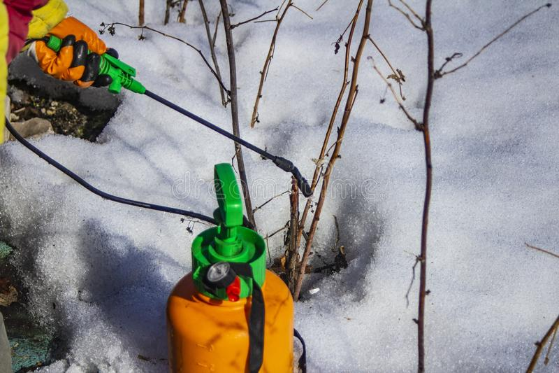 喷洒果树从虫和昆虫的晚冬 免版税库存图片
