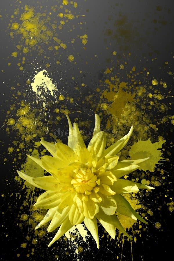 喷溅的黄色大丽花花 免版税库存照片