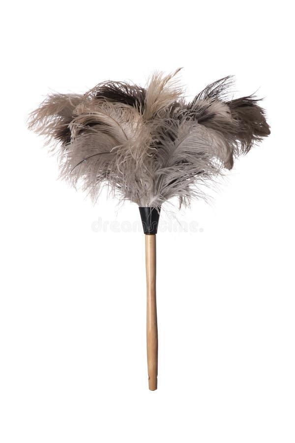 喷粉器羽毛驼鸟 图库摄影