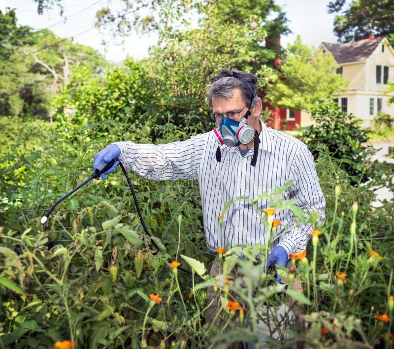 喷洒他昆虫骚扰的西红柿的人 免版税库存图片