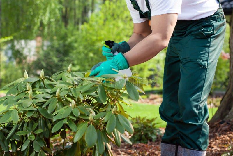 喷洒植物的花匠 免版税库存照片