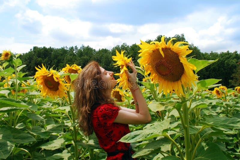 嗅到的向日葵妇女年轻人 库存图片