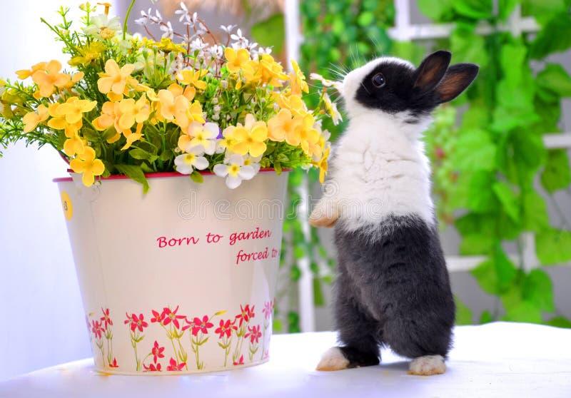 嗅到花宠物兔子 图库摄影