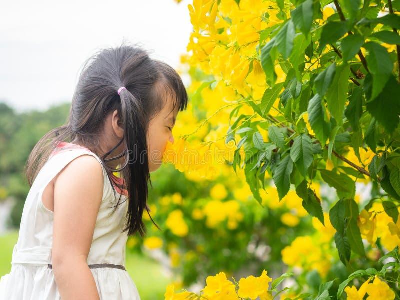 嗅到花的愉快的矮小的逗人喜爱的女孩在公园在晴天 孩子,家庭,滑稽的概念 库存图片