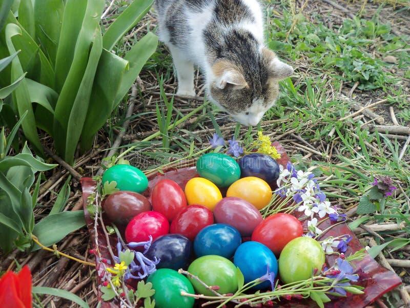 嗅到花的猫夫人 库存照片