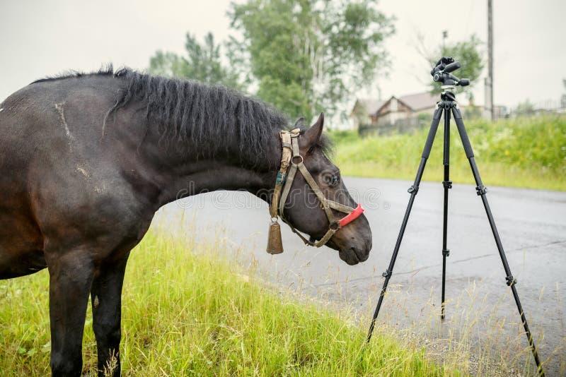 嗅照相机的黑国家马三脚架 库存图片