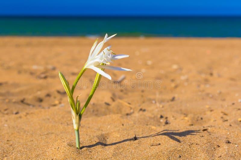 嘉藤Stalos海滩,用lilly水,干尼亚州专区,西克利特,希腊 免版税库存照片