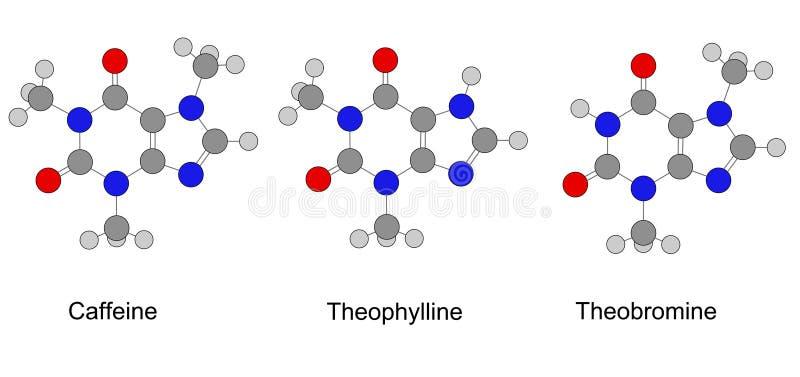 嘌呤系列生物碱  库存例证